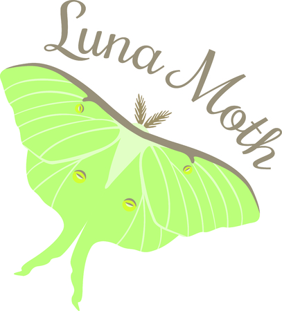Beautiful green Luna Moth lepidopterist collectors and hobbyest. Illustration