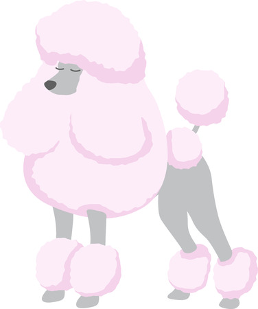 A pink poodle is a great dog for an animal lover. Иллюстрация