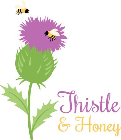 ostrożeń: Purpurowy oset otoczony brzęczenie pszczół szczęśliwie.