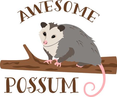 opossum: Cute little opossum on a tree branch.