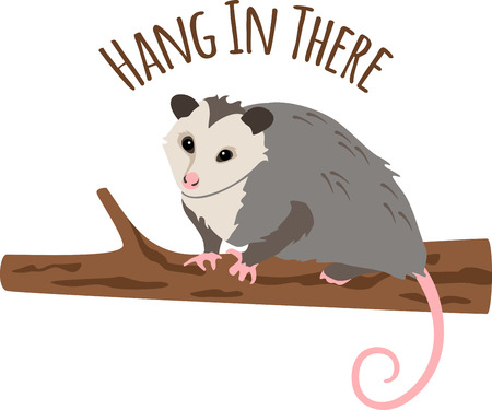 marsupial: Cute little opossum on a tree branch.