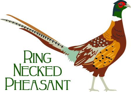 Use this image of a Pheasant in your next design.
