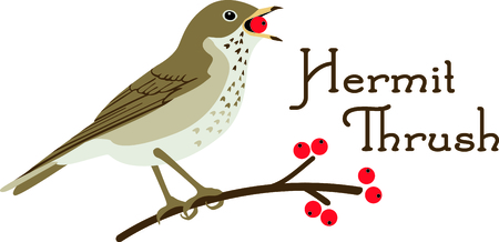 Use this image of a Thrush in your next design. Illusztráció