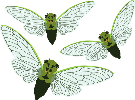 cicada bug: Use this image of a Cicadas in your next spring design. Illustration