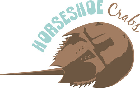 crustacean: Use this horseshoe crab for a shirt. Illustration