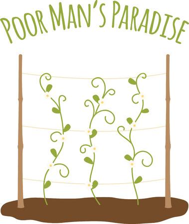 Vining 콩나물 채소 정원에서 성장입니다.