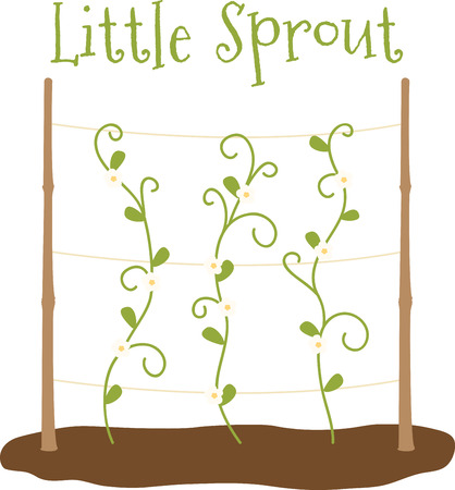 tendril: Vining sprouts growing in a vegetable garden. Illustration