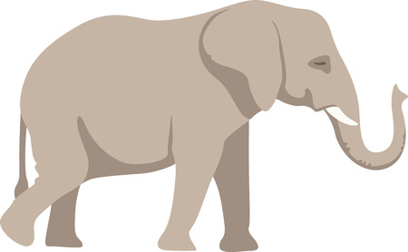 admire: Animal lovers all admire the majestic elephant.