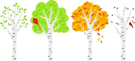 Four seasons Birch trees in a row.