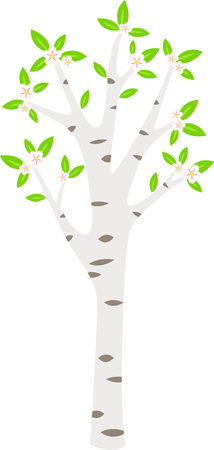 Birch tree with pink floral blossoms in the springtime. Illustration