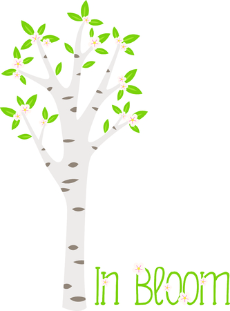 Birch tree with pink floral blossoms in the springtime.  イラスト・ベクター素材