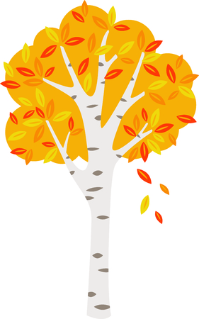 Birch tree with falling autumn colors foliage.