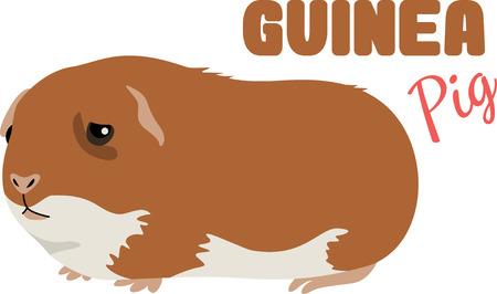 사랑스러운 기니피그는 귀여운 애완 동물입니다.
