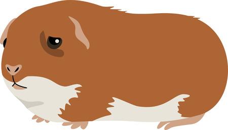 An adorable guinea pig is a cute pet.