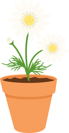 shasta daisy: This beautiful daisy image is perfect for your spring design.
