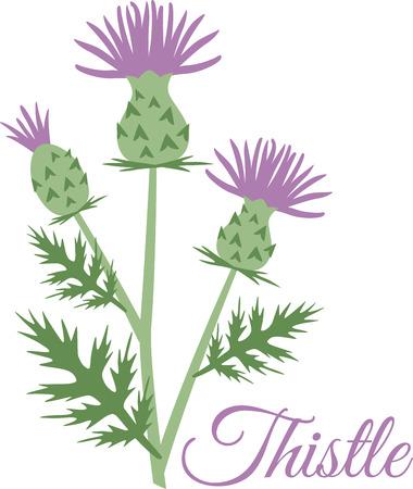이 아름다운 꽃의 이미지는 봄 디자인에 적합합니다.