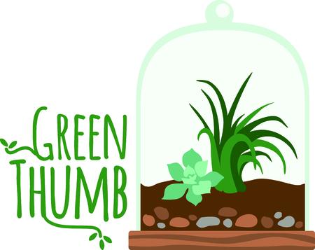 terrarium: Terrarium planter filled with succulent plants for the indoor gardener.