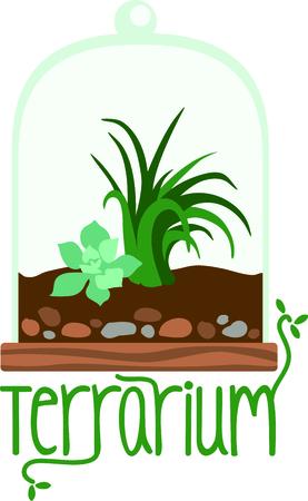 Terrarium planter filled with succulent plants for the indoor gardener.