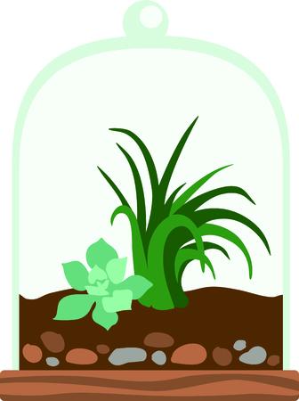 vivarium: Terrarium planter filled with succulent plants for the indoor gardener.