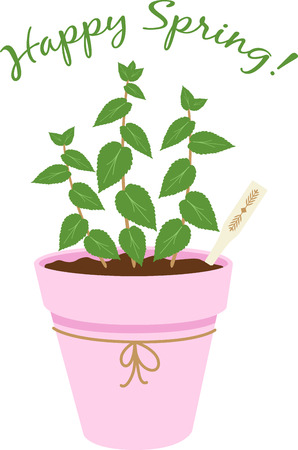 Herbs are a gift given by God to enhance the beauty of our Nature.