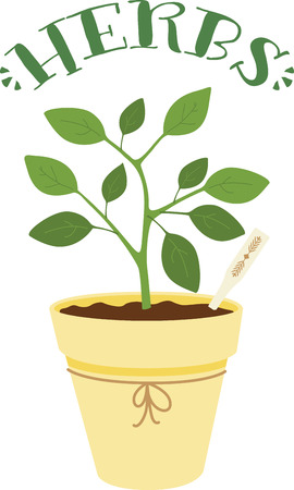 basil leaf: Herbs are a gift given by God to enhance the beauty of our Nature.