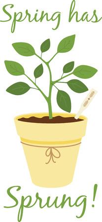 허브는 우리의 자연의 아름다움을 향상시키기 위해 하나님에 의해 주어진 선물이다.