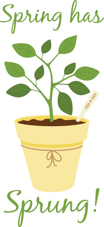 sprung: Herbs are a gift given by God to enhance the beauty of our Nature.