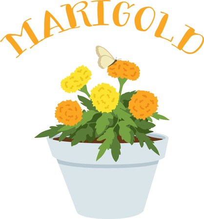 marigold: Flowers are a gift given by God to enhance the beauty of Nature.