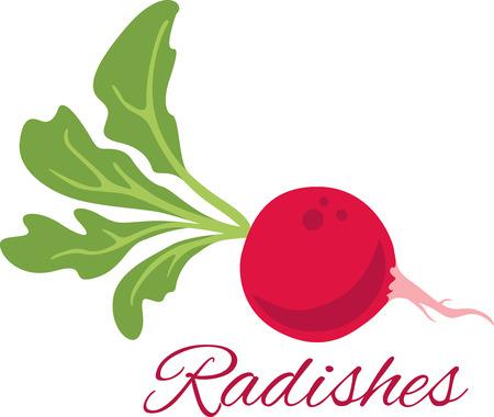 낯 익은 부엌, 주방 수건 등을 사용하여 정원에서 신선한 일상 음식을 맛보십시오.