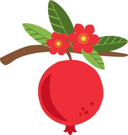 Pomegranate, Fruit, Bloom, Flower, seed, food, fruit, leaf, leaves, pomegranate blossom 向量圖像