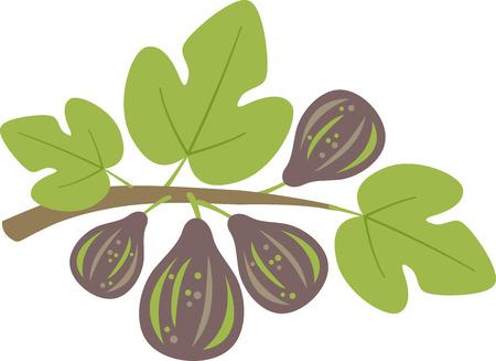 イチジクの花は、春のガーデニングの瞬間から特においしいを作る。春のプロジェクトでこのデザインと春の新鮮さを広める!  イラスト・ベクター素材