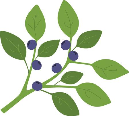 약간은 아주 달콤한 향기와 신선한 통통 블루 베리의 익은 맛처럼 여름을 비명. 주방 린넨, 테이블 보 등에 대한이 디자인으로 수확을 즐기십시오! 스톡 콘텐츠 - 45592482