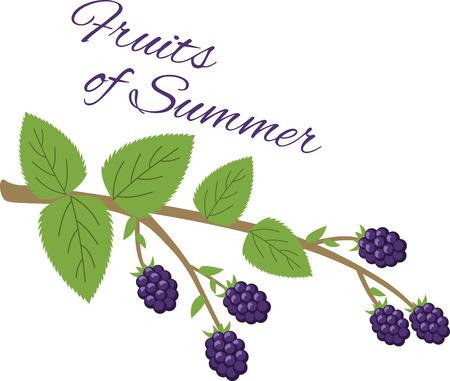 Maak een prachtige look voor de zomer met een lekkere bramen op placemats, ingelijst borduurwerk en beddengoed! Stock Illustratie
