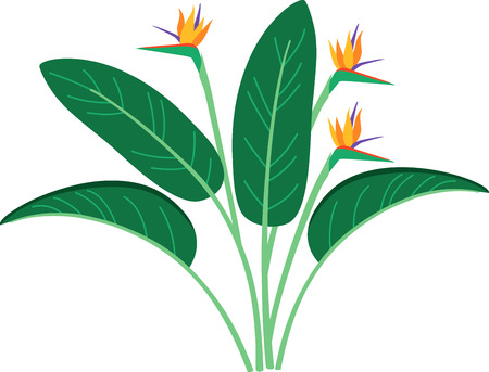 bird of paradise plant: Decorate your homes with the warm glow of birds of paradise and add a tropical flavor to your projects with this bold and beautiful design.