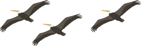 This design of soaring pelicans is very nice.  Use this on a beach bag or zip up jacket. Ilustracja