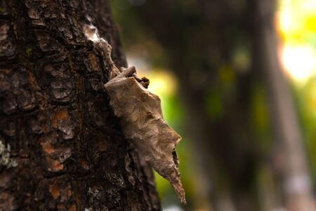Pupa Insect overa trunk