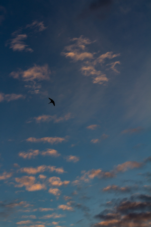 Little bird with its wings open in the vastness of the sky
