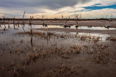 Dry trees in the flooded city of Epecuen in the province of Buenos Aires. Abandoned city. Depopulated site.