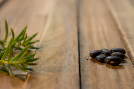 Some green branches and some seeds on a wooden rustic board. Plant foods on neutral backgrounds.