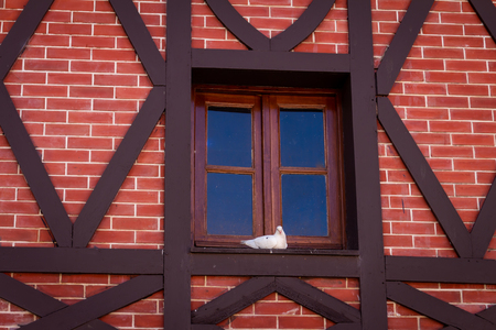 Small white dove on a window. Wall of red bricks and wooden boards.