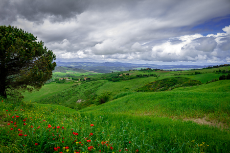 Mountainous landscape of the Italian Tuscan. Hills sown with vines. Italian countryside