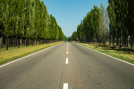 Asphalt route with intermittent lines framed by trees of green foliage.