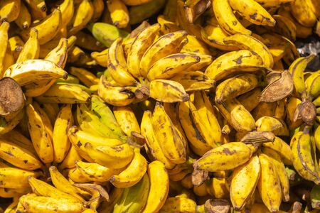 Bananas ripe in the sun. Fruits for runners. Pure energy of vegetal origin. Reklamní fotografie
