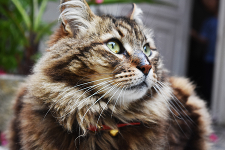 creole: Creole cat crosses mountains 3