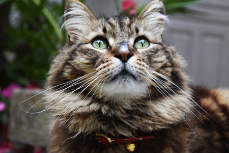creole: Creole cat crosses mountains 2
