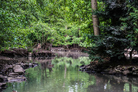 sump: Swamp