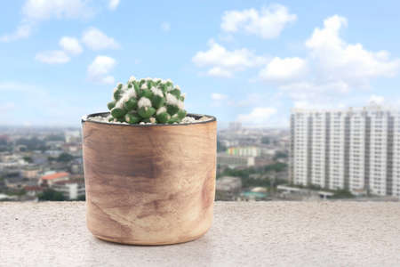 cactus mammillaria bucareliensis erusamu pot are placed on the balcony against the urban background