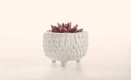 red succulent cactus pots in cream color