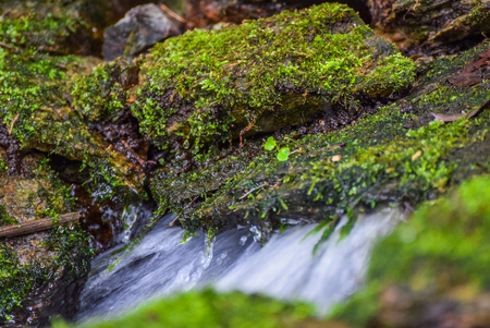 Water source Stok Fotoğraf