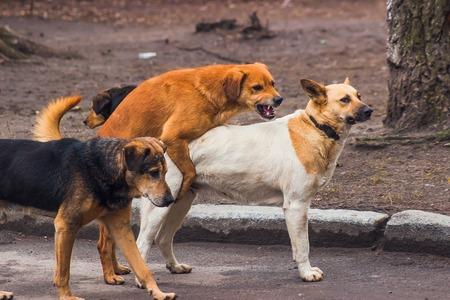 Homeless dogs make sex on the sidewalk Foto de archivo